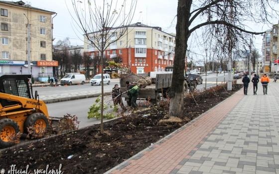На улице Николаева в Смоленске появилось больше кленов
