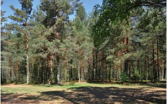 Смолянам рассказали, что планируется делать с лесом в Красном Бору