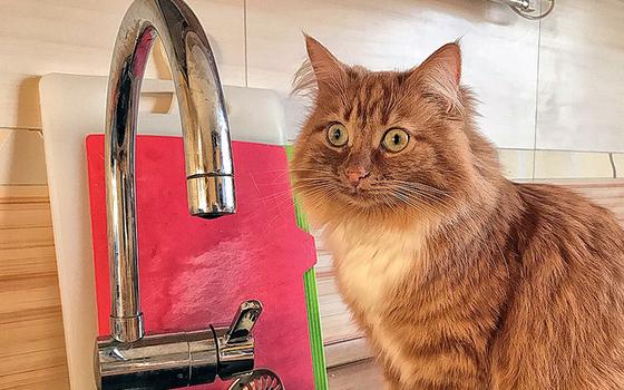 С 18 января в Смоленске отключат воду
