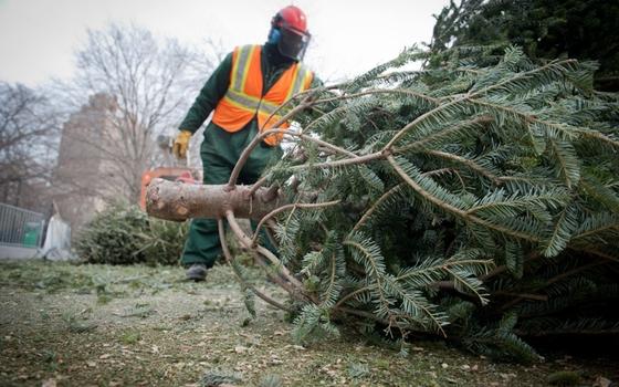 Смолянам рассказали, как утилизировать новогоднюю елку