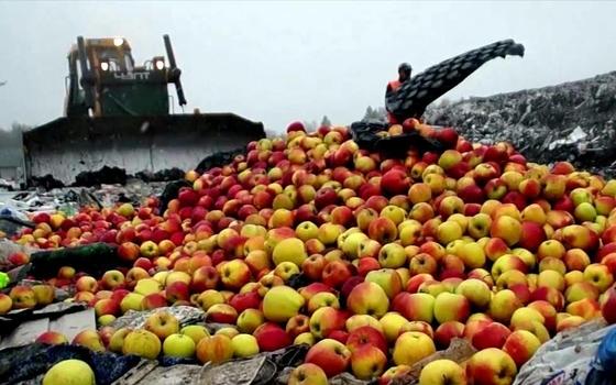 В Смоленской области уничтожили более 22 тонн яблок