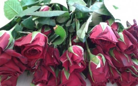 В Смоленскую область не пустили зараженные розы