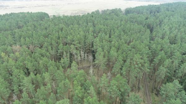 Кто защитит лес?