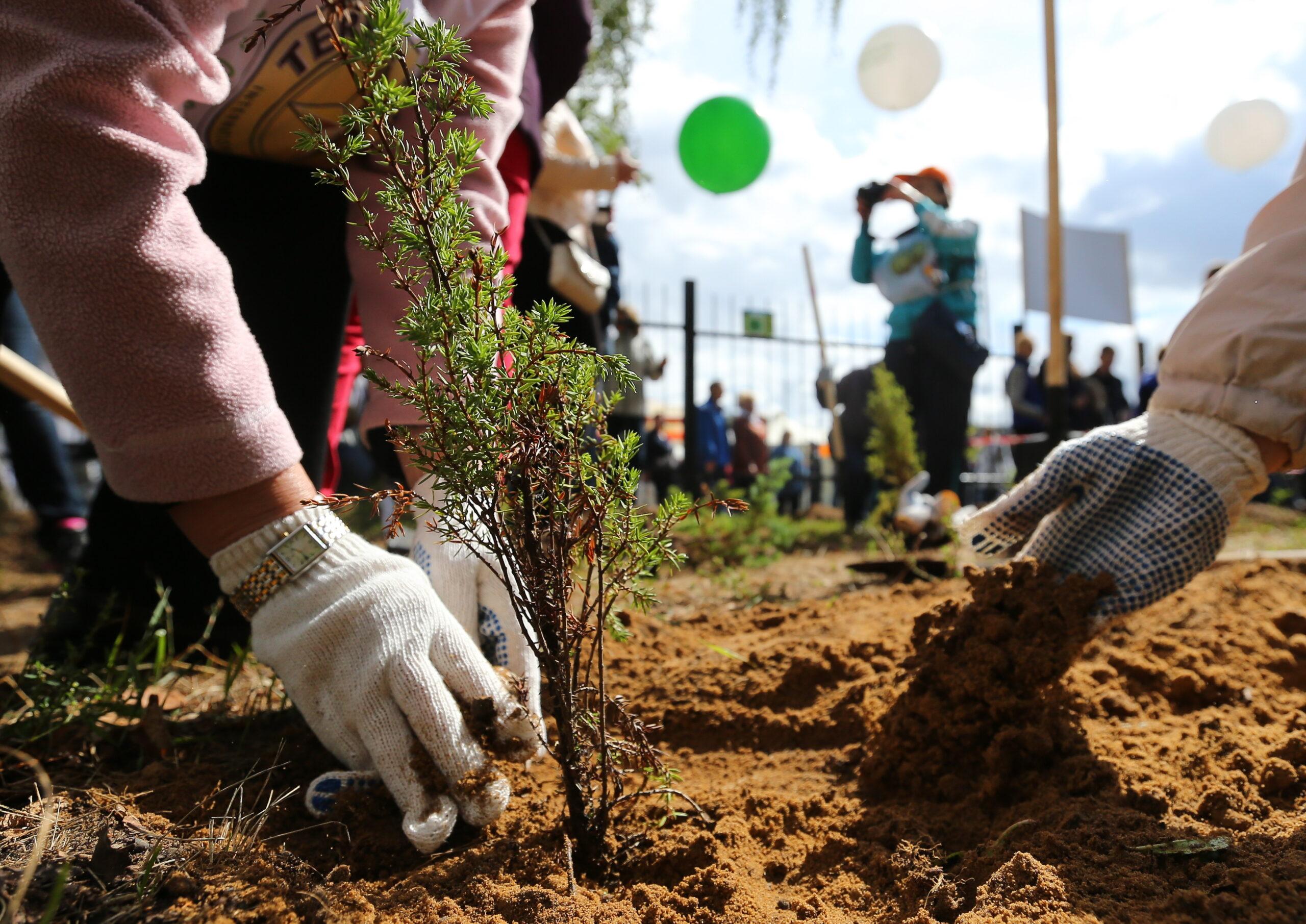 Осенью в Смоленске будет высажено более 400 деревьев и кустарников
